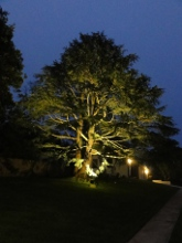 Tree at night - accommodation at Leura